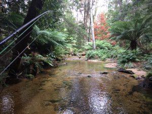Fly fishing tours in Tasmania